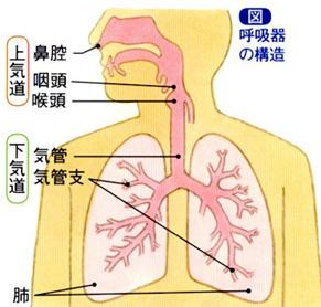 呼吸器の仕組み